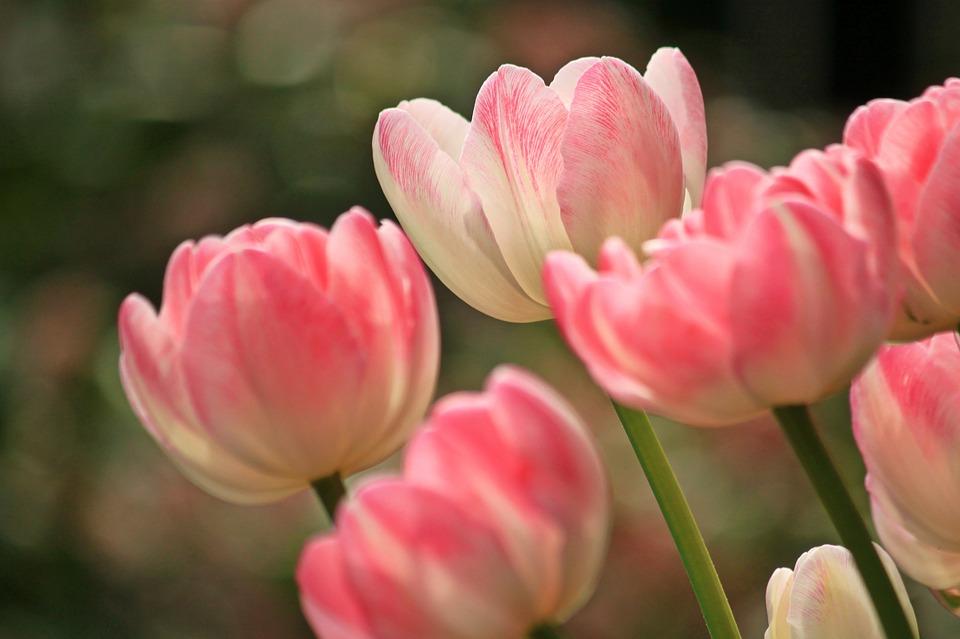 Quelles fleurs choisir pour l'être aimé ?